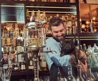 Cheerful stylish brutal barman in a shirt and apron keeps thoroughbred black pug at bar counter background. Stock Image