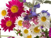 Cheerful summer bouquet Stock Photos
