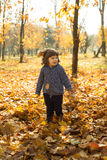 Cheerful toddler boy in autumn park Royalty Free Stock Image