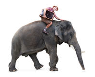 Cheerful tourist rides on an elephant Royalty Free Stock Photography