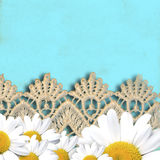 Cheerful turquoise background with daisies Royalty Free Stock Photos