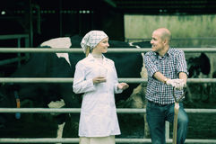 Cheerful veterinarian chatting with farmer. Cheerful veterinarian with fresh milk chatting with farmer in hangar with cows Stock Photo