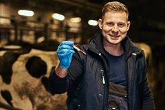 A cheerful veterinarian holding a test-tube with red liquid on a cow farm indoors. Cheerful veterinarian holding a test-tube with red liquid on a cow farm stock image