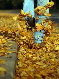Cheerful walk. Leaves yellow in air Stock Photography