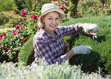 Cheerful woman engaged in gardening bushes Royalty Free Stock Images