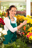 Cheerful woman flower shop market choosing working Stock Photography