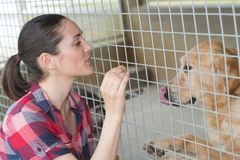Cheerful woman gives dog sweets through fence Royalty Free Stock Images