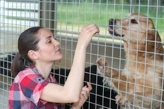 Cheerful woman gives dog sweets through fence Stock Images