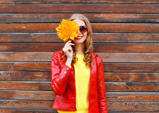 Cheerful woman hides half face autumn yellow maple leafs wearing a red leather jacket over wooden Royalty Free Stock Images