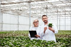 Cheerful workers in garden looking and touching plants Royalty Free Stock Photos