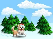 Border Collie and fir-trees gor. The cheerful yellow puppy of a Border Collie wish red cap against the background of the landscape winter forest from fir-trees Stock Image