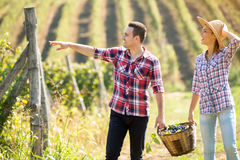 Cheerful young couple working at vineyard royalty free stock photography
