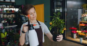 Cheerful young florist watering plant in flower store using sprayer enjoying job stock footage