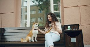 Young lady stroking dog sitting on bench outside in cafe holding cup of coffee. Cheerful young lady is stroking adorable shiba inu dog sitting on bench outside stock video