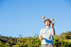 Cheerful young man juggling oranges on citrus farm Royalty Free Stock Photography