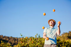 Cheerful young man juggling oranges on citrus farm Royalty Free Stock Image