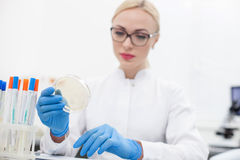 Cheerful young scientist is making an experiment. Professional female researcher is checking samples of analysis. She is sitting at the desk and holding the Royalty Free Stock Photos