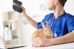 Cheerful young vet examining health of pet Royalty Free Stock Image