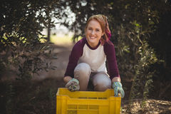 Cheerful young woman collecting olives in crate at farm Stock Photography