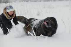 Cheerful young woman playing with caucasian shepherd dog on snow-covered field in frosty winter day.  royalty free stock photography