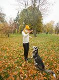 Cheerful young woman with yellow hat and dog husky walking. And having fun outdoor in the autumn park Royalty Free Stock Image