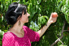 Cheerfull brunette picking fruits Royalty Free Stock Photography