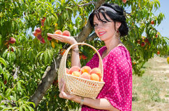 Cheerfull brunette picking fruits Stock Photography