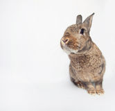 Cheerfull cute rabbit on a white background looking at us. Adorable dwarf bunny looking cheerfully in a shot Stock Image