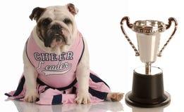 Cheerleading dog Stock Image