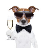 Cheers dog. With  a glass of champagne Royalty Free Stock Image