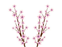 Cheery Blossoms. An image of Cheery Blossom Branches stock illustration