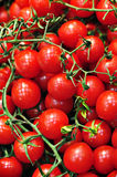 Cheery tomatoes Stock Images