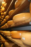 Cheese. Shees on a shelf on the cheese farm stock images