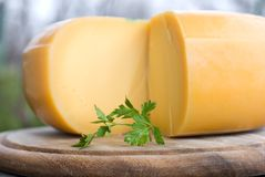 A cheese Royalty Free Stock Photos