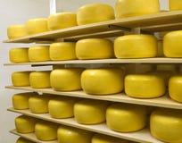 Free Cheese Stock Photo - 9966260