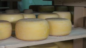Cheese balls in aging room stock video footage