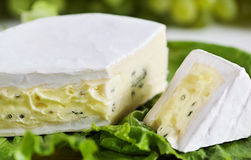 Cheese with blue mould Royalty Free Stock Image