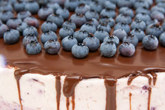Cheese cake with blueberries Royalty Free Stock Photos