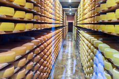 Cheese on Cellar racks Royalty Free Stock Photos