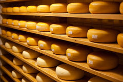 Cheese cellar royalty free stock photo