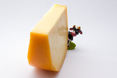 Cheese and cow Royalty Free Stock Image