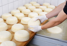 Cheese dairy. Ripening domestic cheese at the cheese dairy Royalty Free Stock Images