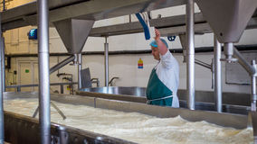 A Cheese factory employee making curd. A Cheese factory employee looking after a fresh vat of curd in a local factory royalty free stock image