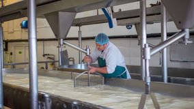 A Cheese factory employee making curd. A Cheese factory employee looking after a fresh vat of curd in a local factory stock photos