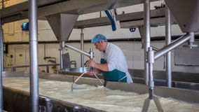 A Cheese factory employee making curd. A Cheese factory employee looking after a fresh vat of curd in a local factory royalty free stock photography