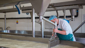 A Cheese factory employee making curd. A Cheese factory employee looking after a fresh vat of curd in a local factory stock images