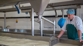A Cheese factory employee making curd. A Cheese factory employee looking after a fresh vat of curd in a local factory royalty free stock photo