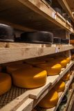 Aging cheese at cheese factory Stock Image
