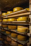 Aging cheese at cheese factory Royalty Free Stock Photography