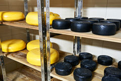Cheese factory warehouse with shelves of product capretto and la Stock Image